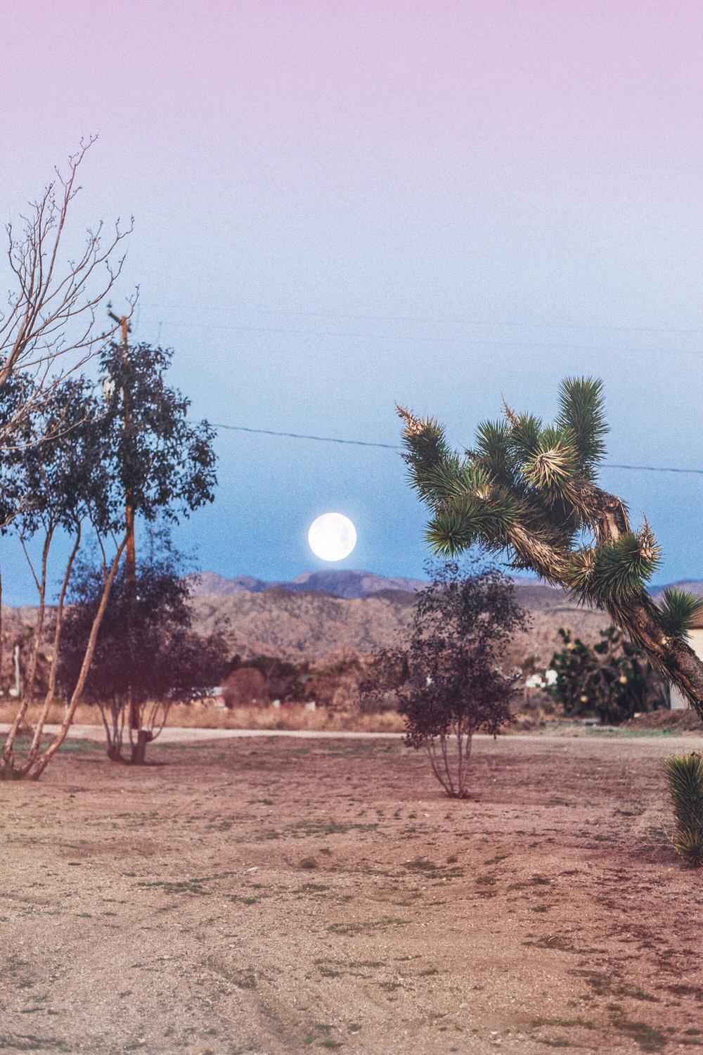 Joshua Tree Desert Moon