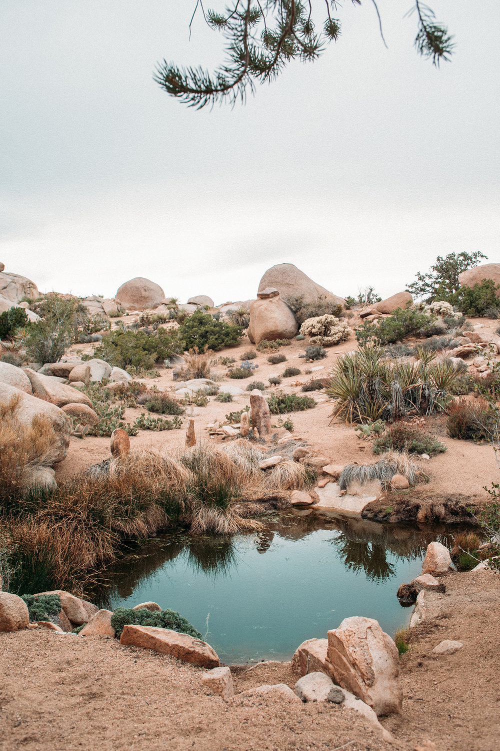 Joshua Tree Retreat Photography