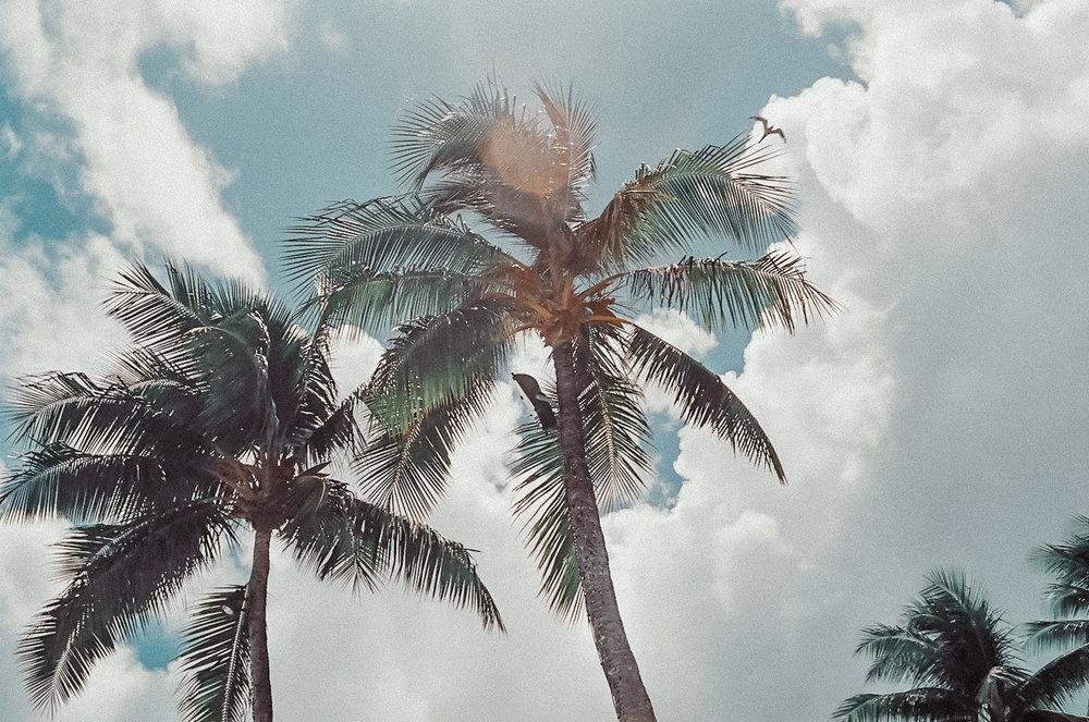 palm trees / tahiti travel photography / film photos / kelly fiance creative