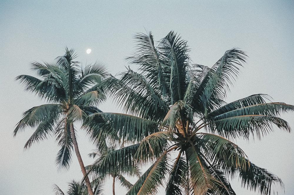 palm trees / tahiti travel photography / kelly fiance creative