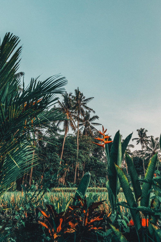 bali-indonesia-yoga-retreat-travel-photography-2.jpg