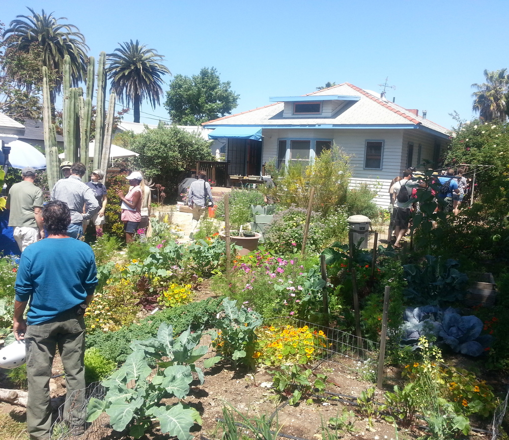 growing food with rainwater and greywater