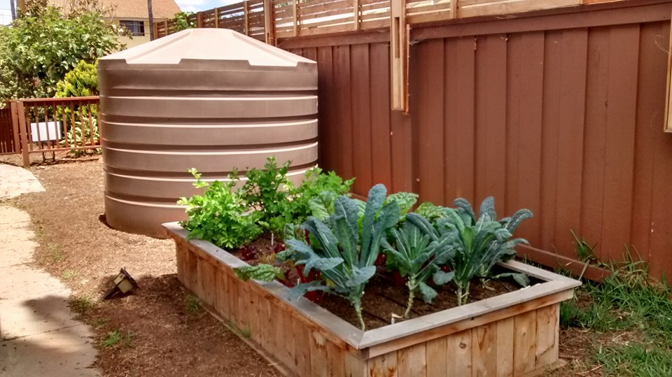 This 1320 gallon rainwater tank keeps several raised boxes of veggies feeding the homeowner and her neighbors through a local CSA program.