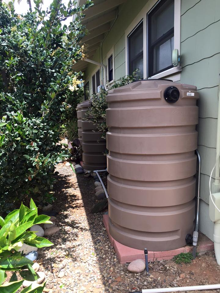 4 x 205 gallon rainwater tanks in this small sideyard add up to 800+ gallons for fruit trees to make it through the summer.