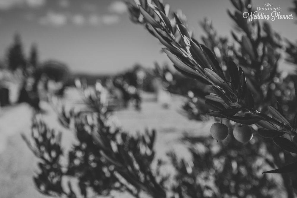 Black & White Photography creates magic