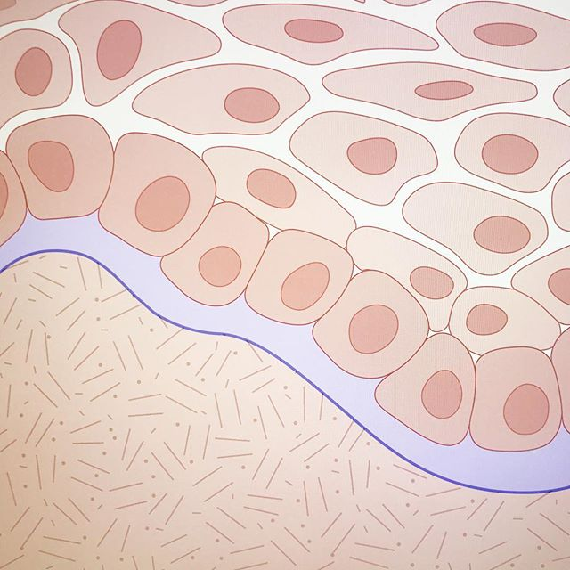 Laying down base tones for a series focusing on the skin. In other news: I would totally wear this epidermis/dermis printed on a scarf!