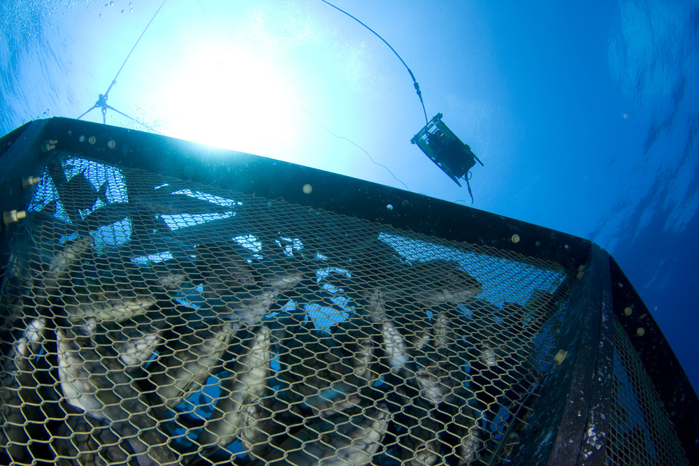ROV and cage 5.jpg