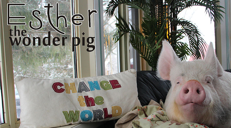 ALL ESTHER PHOTOS © ETWP™ | http://www.estherthewonderpig.com ➤➤ THE DIETARY GUIDELINES OF SATYAVEDISM | TDGOSV | READ ➤➤
