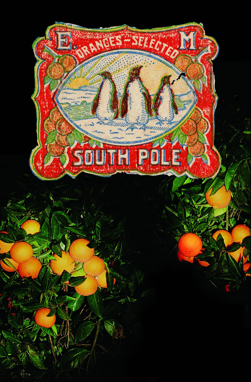 penguins#1.jpg
