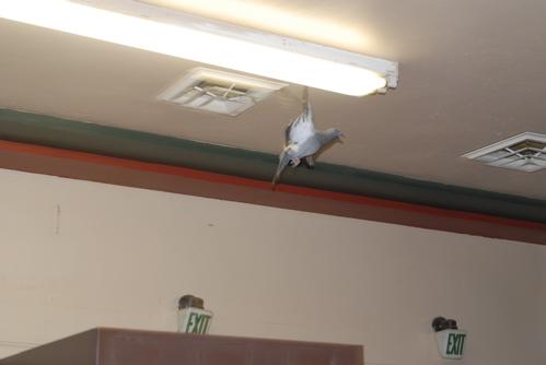 bird-in-foyer.JPG