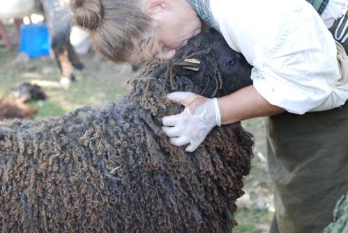 wool-love.JPG