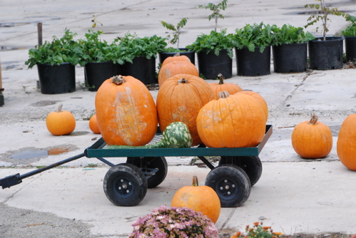 pumpkin-wagon.JPG