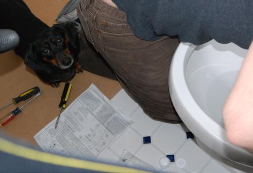weiner-toilet.JPG