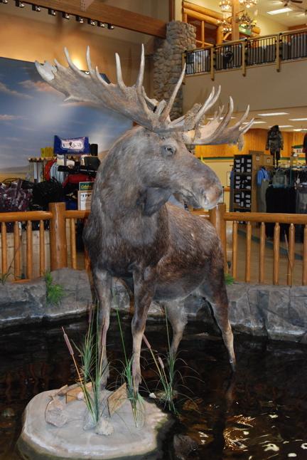 big-moose.JPG