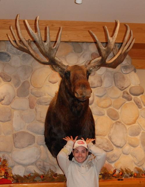 moose-head.JPG