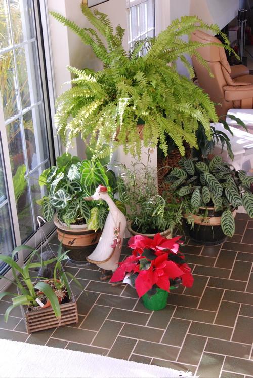 christmas-patio.JPG