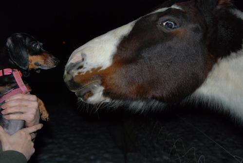po-horse.JPG