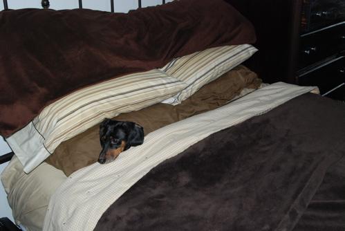 po-in-a-blanket.JPG