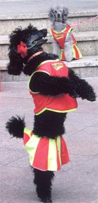doggy4.jpg