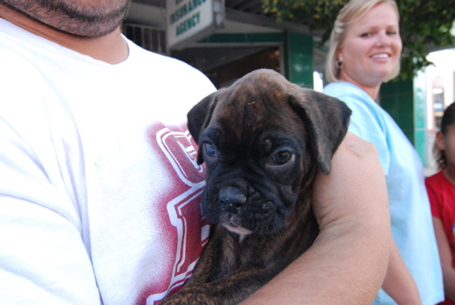 cuter-pup.JPG