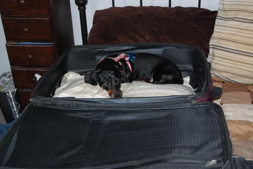 po-in-suitcase.JPG