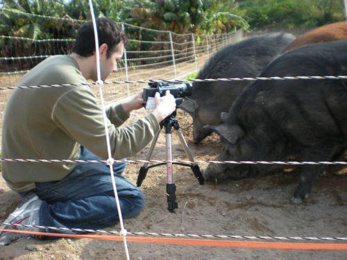 filming-pigs.jpg