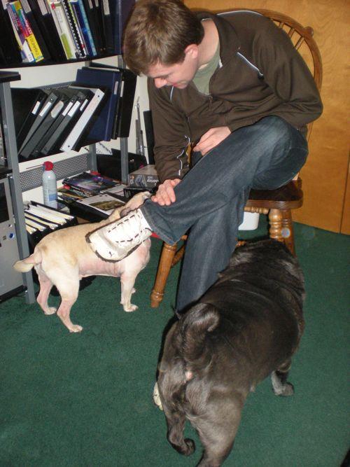 david-and-pugs.jpg