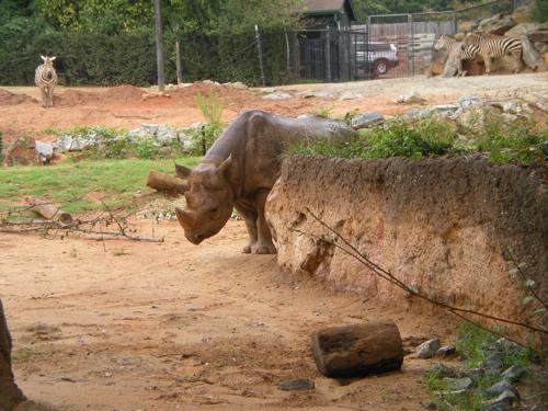 atlanta-zoo.jpg