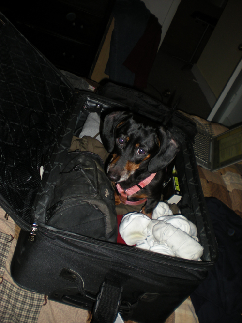 po-luggage.jpg