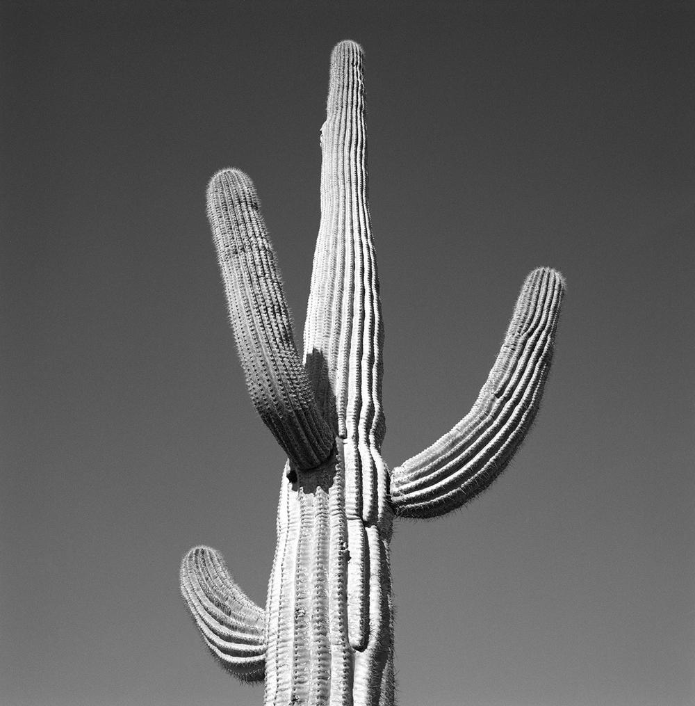 cactus#1.jpg