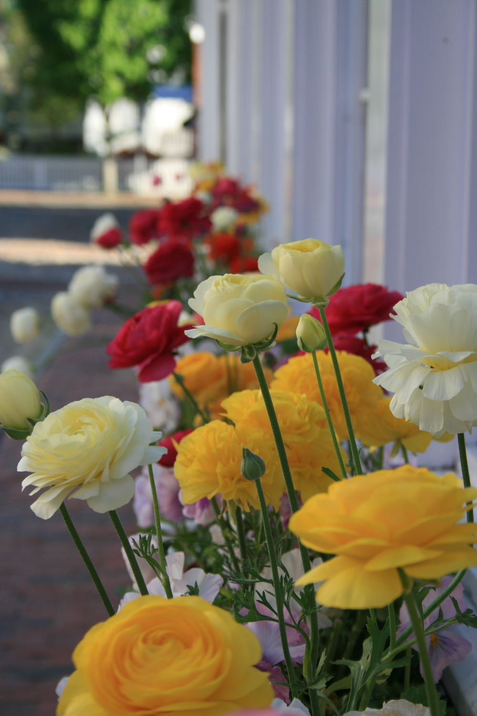 Flower Boxes | Nantucket, MA