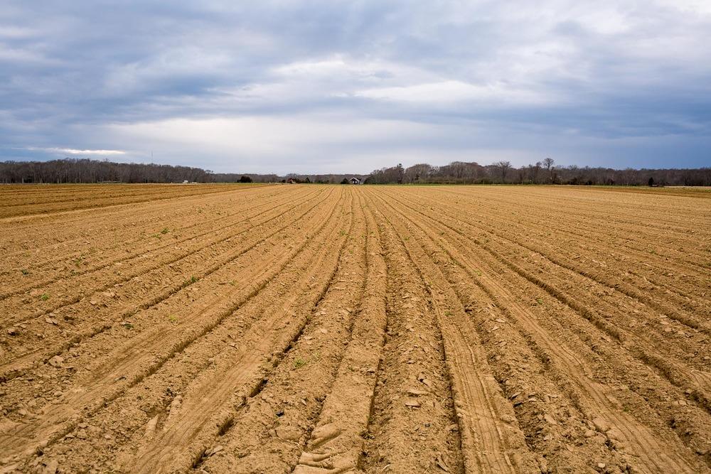 BALSAM FARMS
