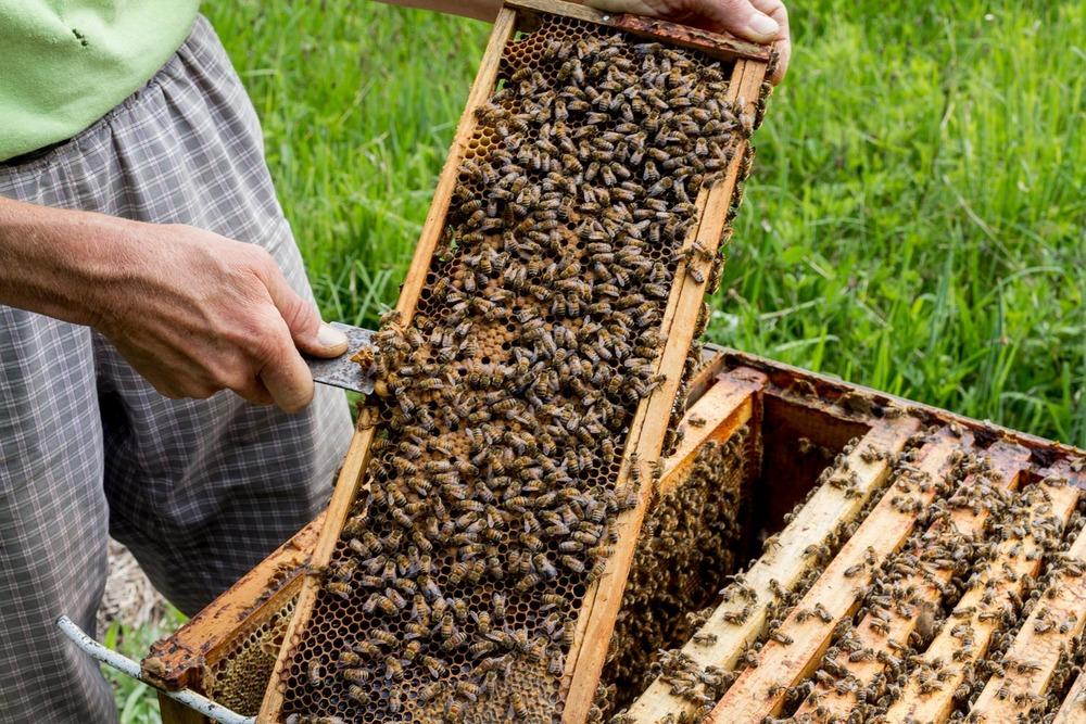 BEES' NEEDS