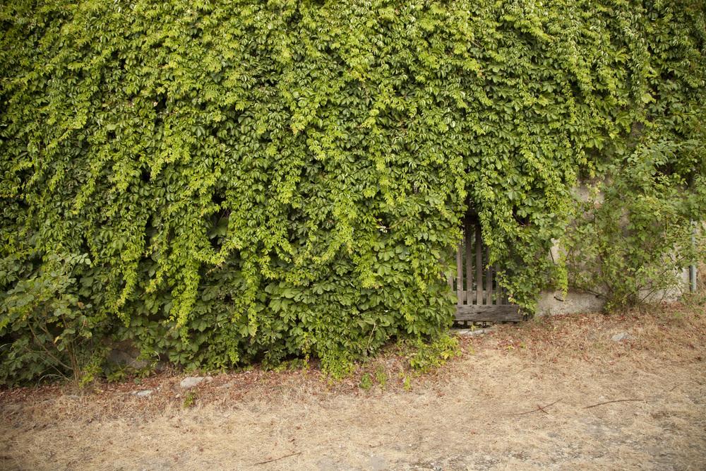 medieval_overgrown_gate_2.jpg