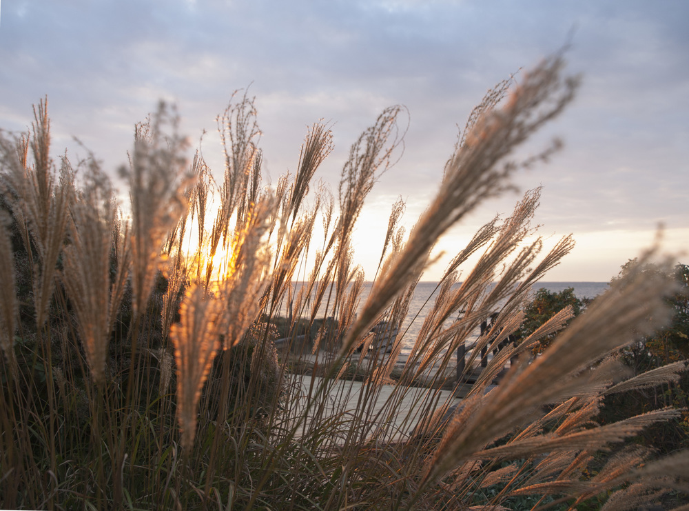 sunset_grasses.jpg