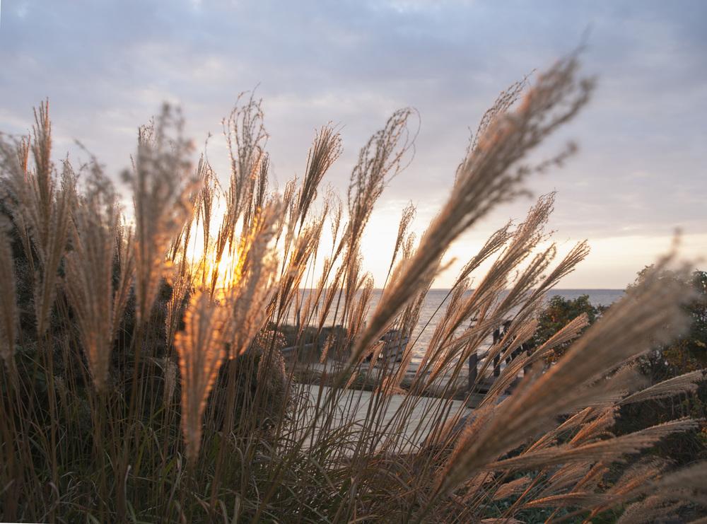 sunset_grasses.jpg