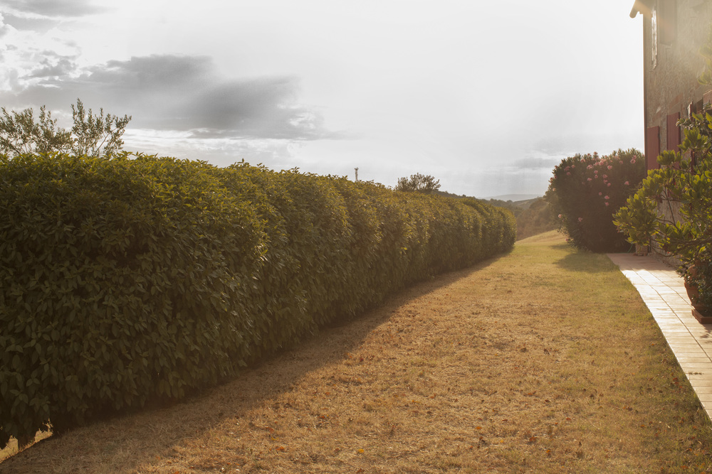 Tuscan_hedgerow.jpg