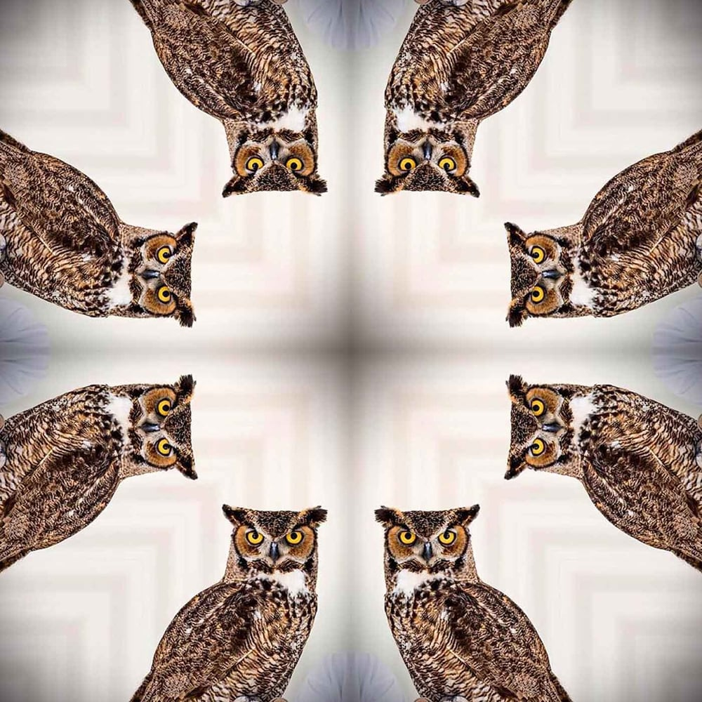 had-some-fun-the-other-night-playing-with-an-owl-remix-thewatchman-hoot-hoot-203365_20243191761_o.jpg