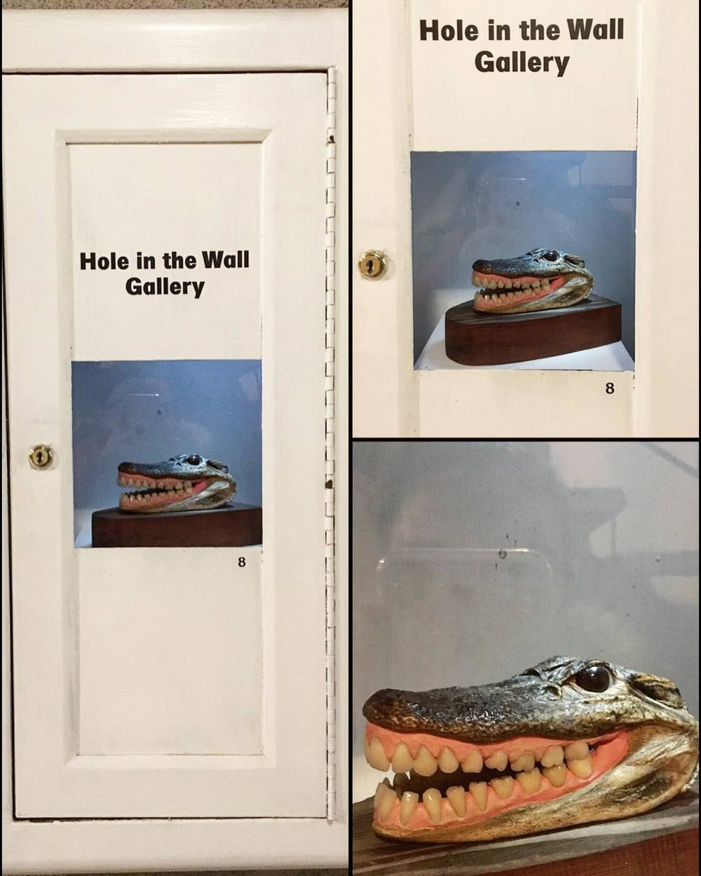 best-gallery--museum-ever-54366---croc-crocodile-alligator-gator-dentures-holeinthewall-littlesurprises-smile_25138575333_o.jpg