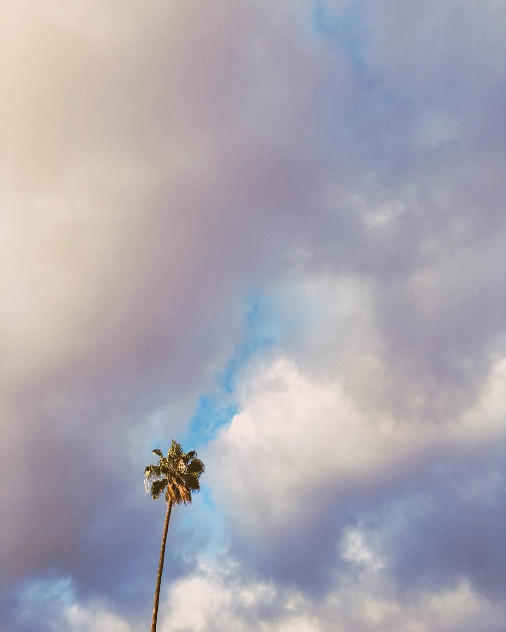 cottoncandy-on-a-stick-palm-palmtree-puffy-clouds-yum-53366-rainydays-sunshine-peeking-through_25731884835_o.jpg