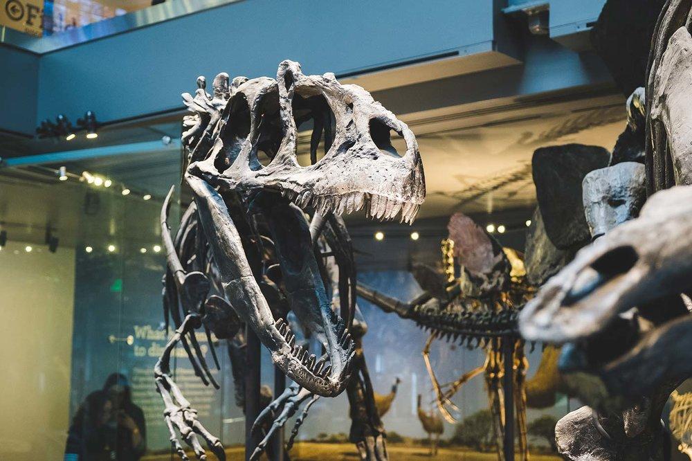 sNatural-History-Museum---Feb-2017-81.jpg