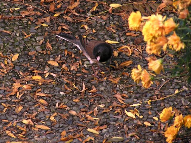 fall+bird.JPG