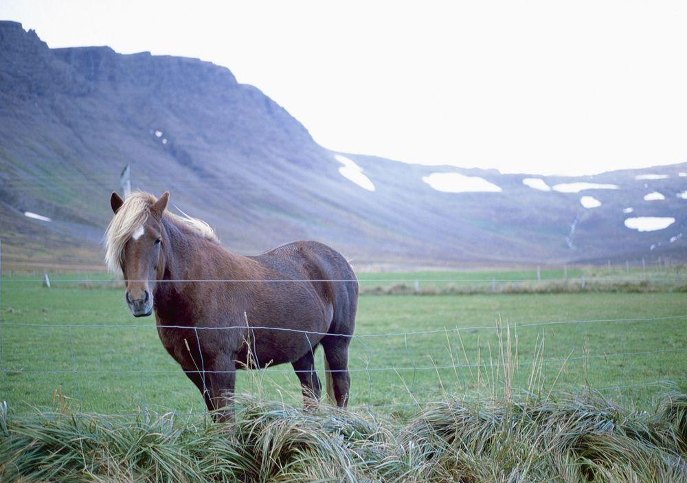 Iceland_001 (112).jpg