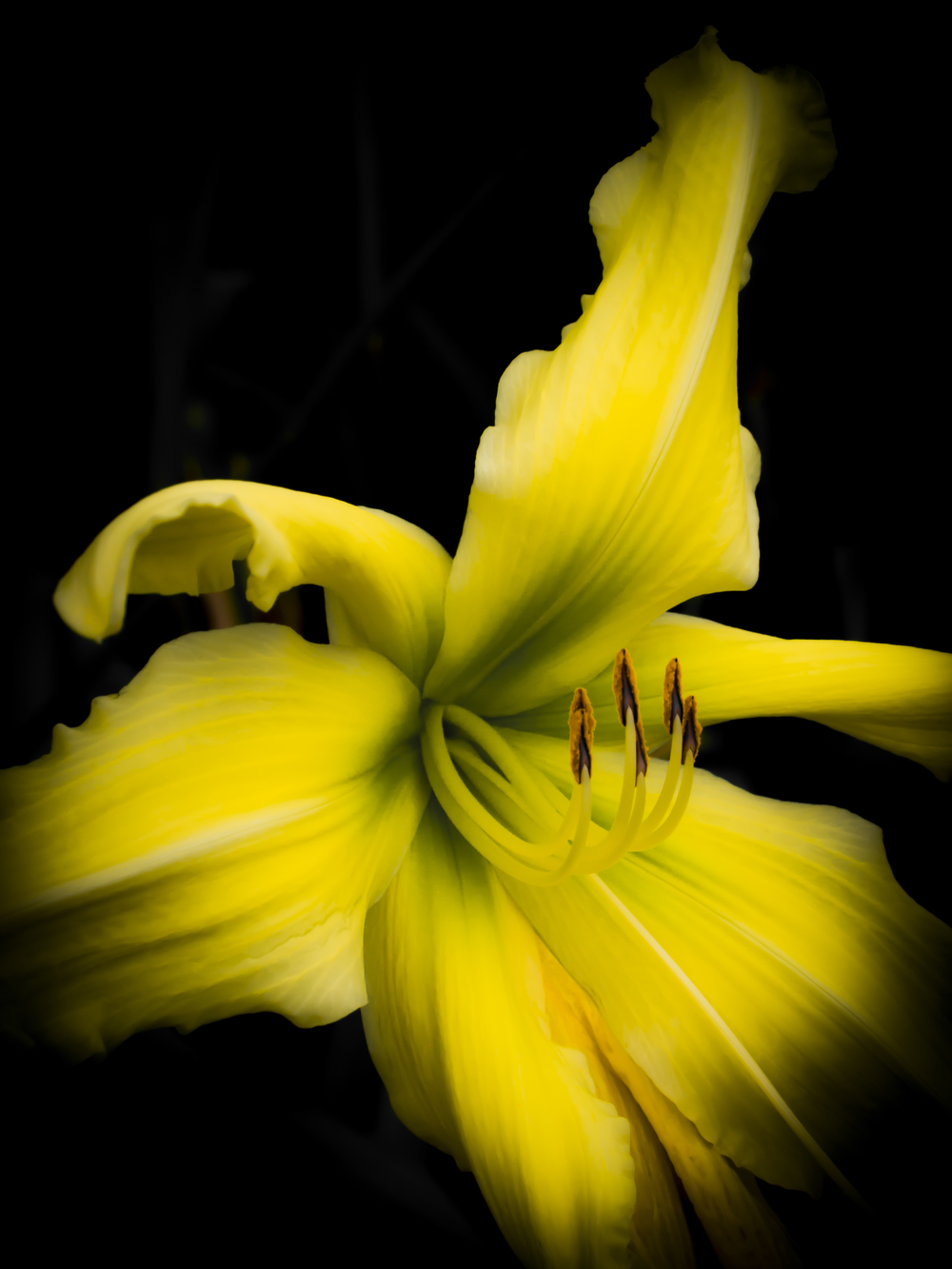 Brocaded Gown Daylily.JPG