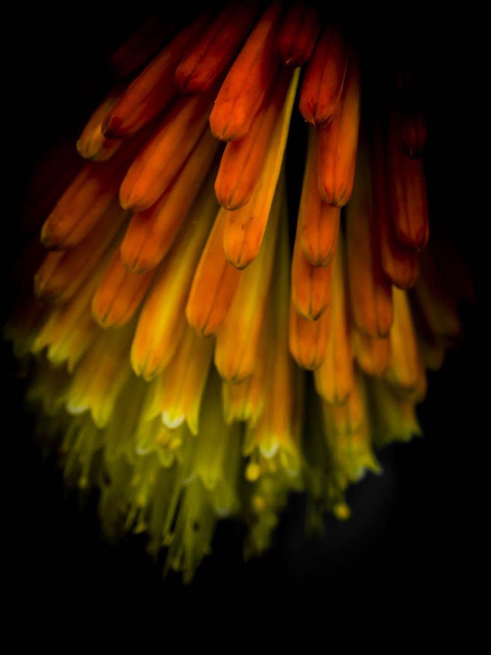 Rainbow Band Flower.JPG