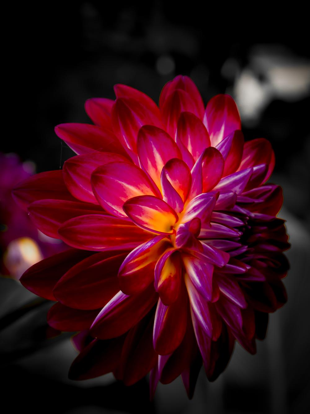 Vibrant Flower.JPG