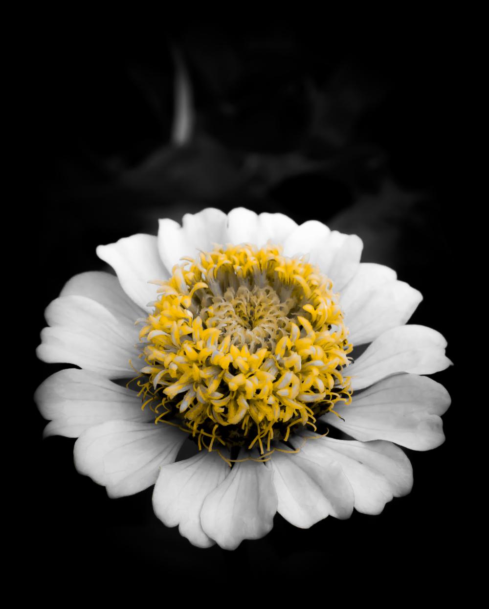 Yellow Core Flower.JPG