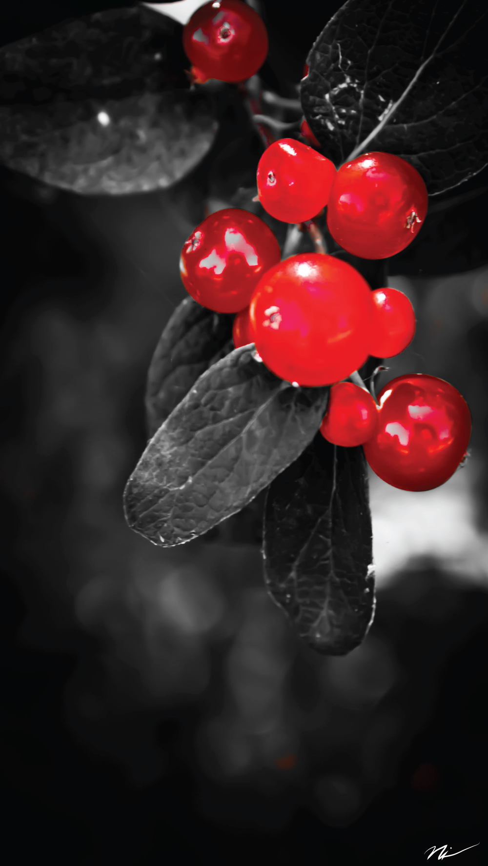 Cherries.jpg