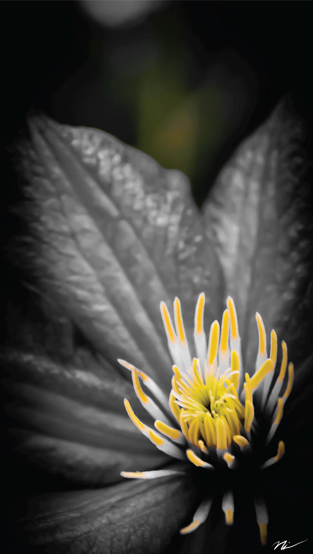 Clematis-Flower.jpg