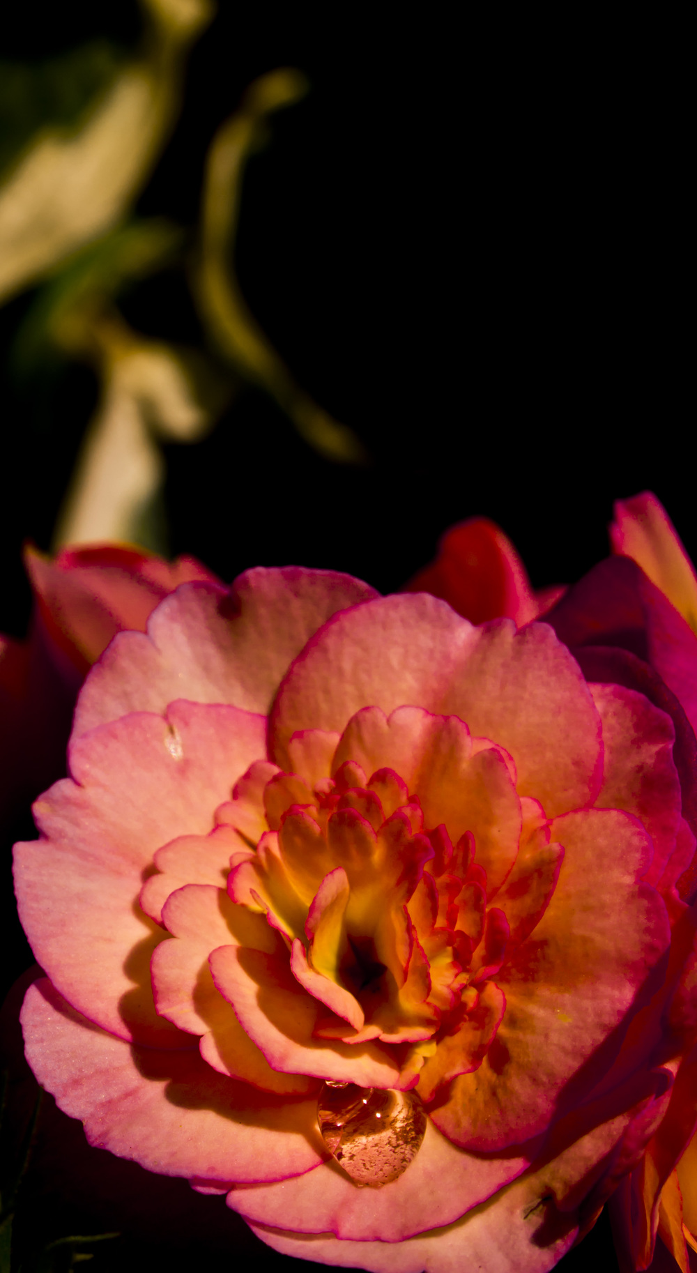 Flower and Water Droplet.jpg